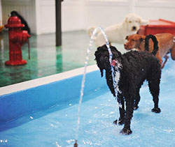 Tiny Alien Dog checks water purity
